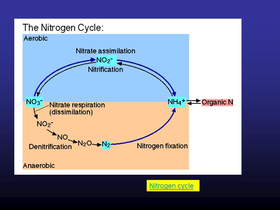 FERTILIZER INDUSTRY | Physical Sciences Break 1 0